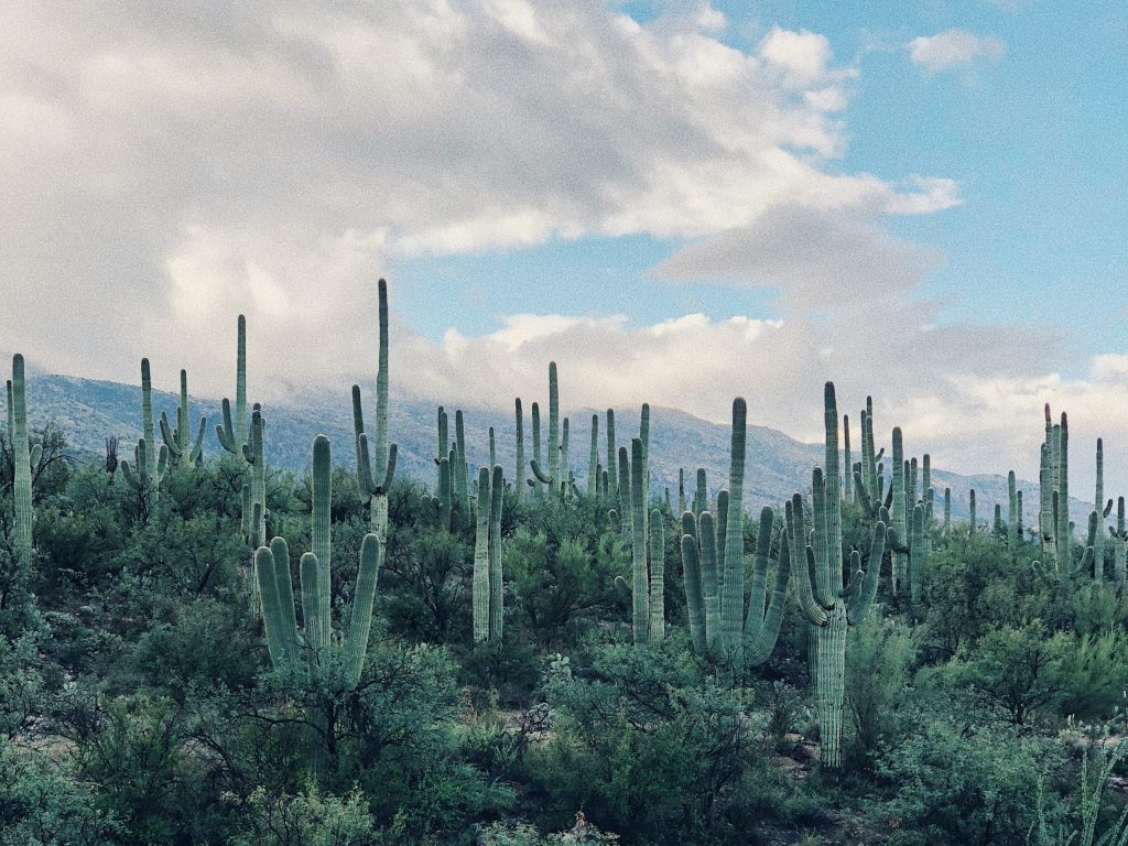 Reverse Mortgage Brokers & Lenders Mesa, AZ